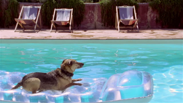 Medium shot dog floating in pool on inflatable raft/ Saint-Ferme, France