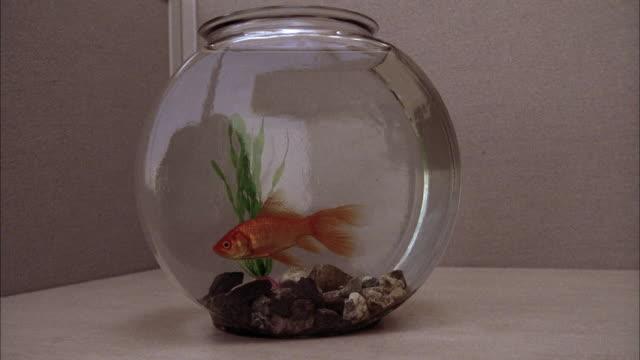 Medium shot fish swimming in fishbowl