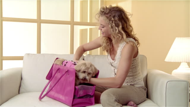 Medium shot girl sitting on sofa, putting Maltese-Toy Poodle mix in pink shoulder bag/ close up dog in bag