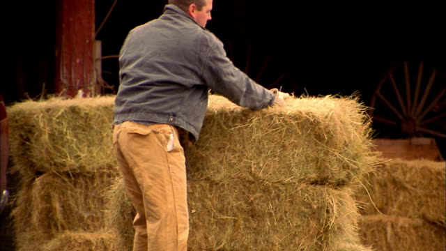 Medium shot man lifting stack of hay and putting in pickup truck / man wearing hat + walking over to truck
