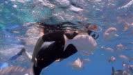 Medium shot mature man snorkeling alongside school of fish