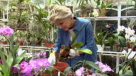 Medium shot Mature woman gardening among orchids in greenhouse