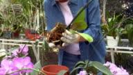 Medium shot Mature woman gardening among orchids in greenhouse