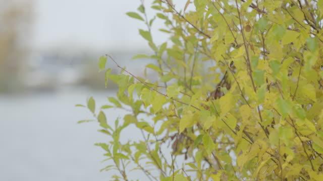 Medium shot of a bush on the shore of Lake Hood