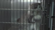 A medium shot of a long-haired cat trapped in a cage.
