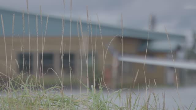 Medium shot of a wooden building at Iliamna airport behind tall grass
