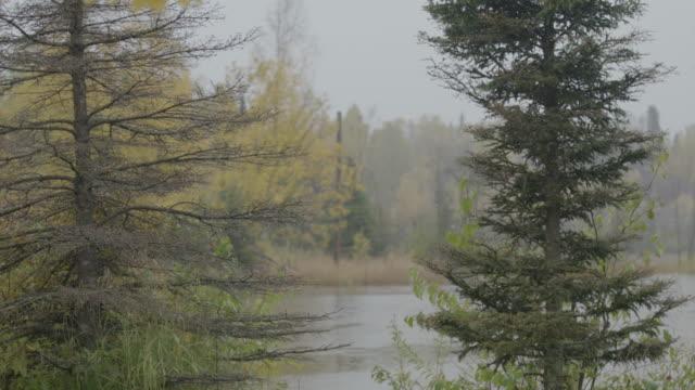 Medium shot of trees on the shore of Lake Hood