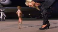 Medium shot pan Diva playing with chihuahua near private airplane at night / Long Beach, California, USA
