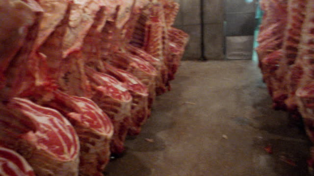 Medium shot pan meat packing plant with animal carcasses hanging on hooks