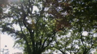 Medium shot sun shining through keyaki trees in plaza in front of Imperial Palace/ tilt down to park benches/ Tokyo