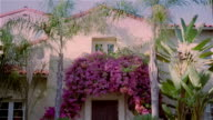 Medium shot tilt down from tree branches to walkway leading ot front door of house adorned with tropical plants and trees