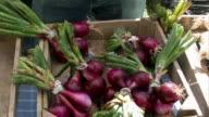 Medium shot tilt down vendor at farmer's market putting bundles of onions in bin/ tilt up man/ tilt down onions/ Halcottsville, New York