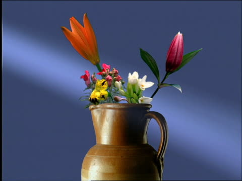 Medium shot time lapse various flowers blooming in pitcher in studio