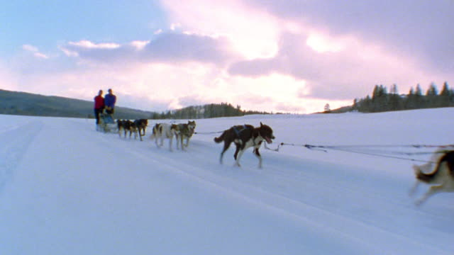 Medium shot tracking shot team of dogs pulling couple in dogsled through snow w/trees and mountains in background / Colorado
