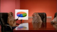 Medium shot zoom out to wide shot baboon pointing to pie chart / 2 other baboons around conference table watching