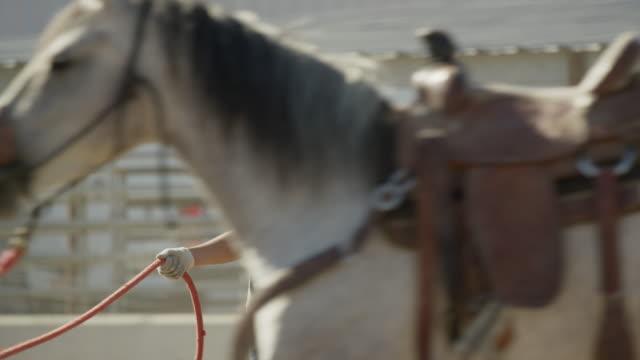 Medium slow motion panning shot of girl running horse in circle / Lehi, Utah, United States