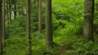 Medium slow motion panning shot of trees in green forest / Bavaria, Germany