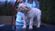 Medium static - A pet owner bathes his puppy.