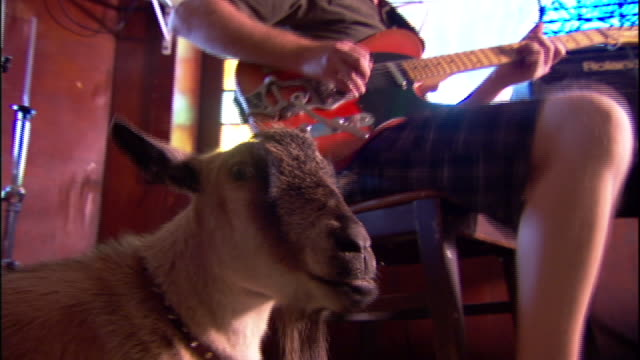 Medium static - A young man plays an electric guitar while a pygmy goat stands nearby.