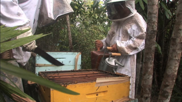 Medium static - Beekeepers work with tools to extract honeycomb from an beehive. / Brazil