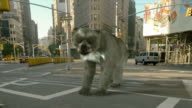 Medium tilt-down - The Flat Iron building disappears behind a bear-dog in a computer-generated animation. / New York City, New York, USA