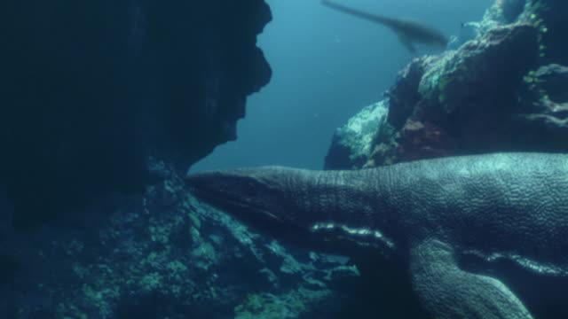 Medium zoom-out - An underwater sea creature lurks behind rocks near prey. / Los Angeles, California, USA