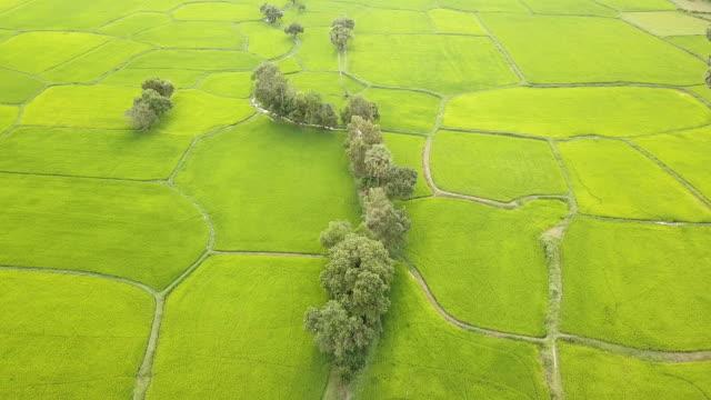 Mekong Rice fields