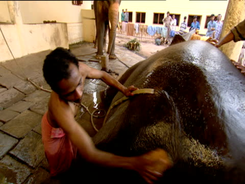 Men bathing elephant Goa