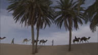WS PAN Men leading camels across desert sand dunes with palm trees in foreground / Tunisia