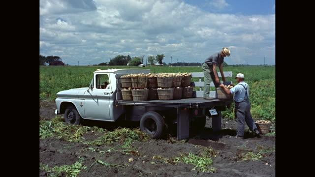 WS PAN Men loading baskets of potatoes on 1963 Chevrolet truck in field / United States