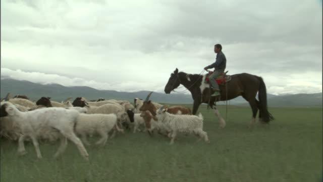 Men on horseback drive sheep over plains, Bayanbulak grasslands
