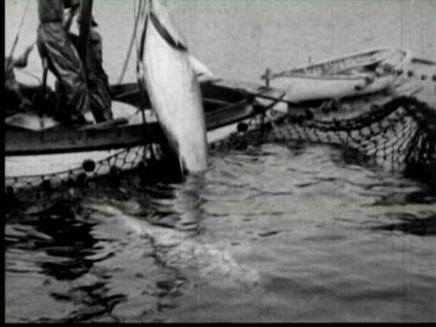 B/W Men pulling big fish in boat, United States / AUDIO