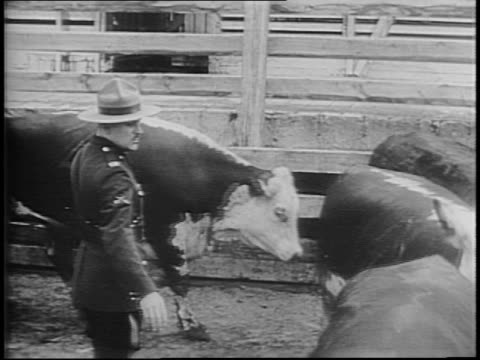 Men pushing sides of beef in warehouse / men inspecting and hand slicing meat / hundreds of cattle graze and roam in field / men on horseback herd...