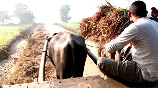Männer Reiten Büffel Einkaufswagen in das Feld