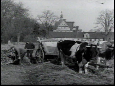 men shoveling manure on to an oxdrawn wagon / women piling hay into stacks