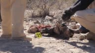 Mexicans comb the desert on Saturday looking for remains of missing people in the Valle de Juarez near the border with the United States as part of...
