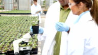 Microbiologists study plants in professional greenhouse laboratory