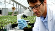 Mid adult Caucasian scientist gives plant nourishment in greenhouse