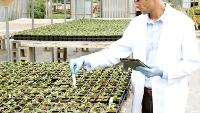 Mid adult scientist conducting plant life experiment in greenhouse