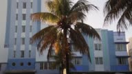 Mid Shot palm tree in front of Park Central Hotel in Miami Restrictions will cost Florida about $1 billion in lost revenue It was calculated that...