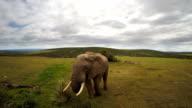 Mighty elephant on the plain