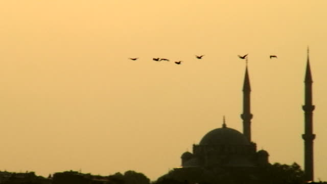 Migratory birds from Turkey. Suleymaniye Mosque