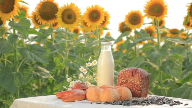 Milk and bread on sunflower field