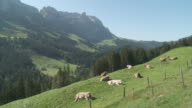 MS Milk cows in pasture with mountains / Appenzell, Appenzell Innerhoden, Switzerland