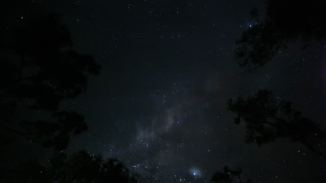 T/L, WS, milky way galaxy, stars and clouds passing over trees / Arnhem Land, Northern Territory, Australia