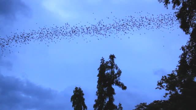 Millionen von Fledermäuse fliegen von Höhle in der Dämmerung