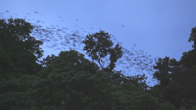 Million of bats flying from cave at dusk