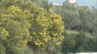 Mimosa   Zoom back   Garden of olives   Long shot