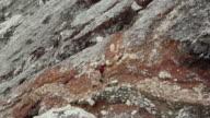 WS Miner climbing the Ijen volcano crater carrying sulfur / Ijen, Java, Indonesia