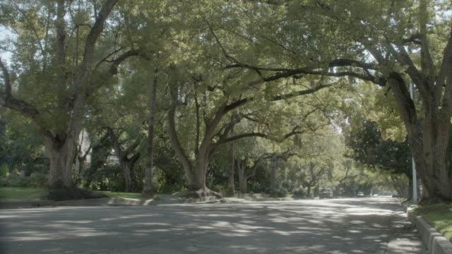 WS Minivan driving down a tree-lined, suburban street / Pasadena, California, United States